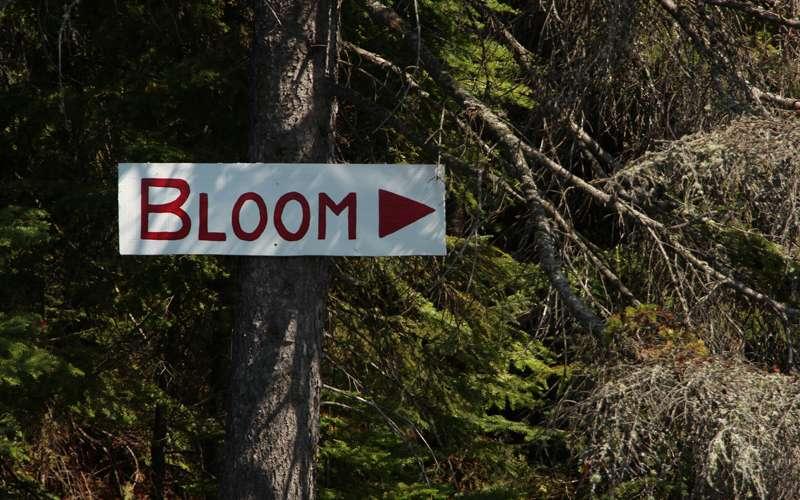 Bloom Lake Ontario